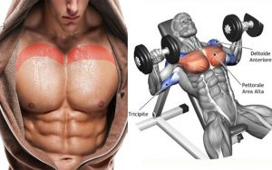 Inclined bench press of dumbbells
