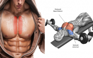 Dumbbell laying lying on a horizontal bench
